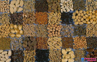 Семена овощей – что нужно знать?