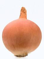 Семена лука Леон (Leone). Упаковка 250 000 семян. Производитель Bejo Zaden
