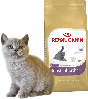 Royal Canin British Shorthair Kitten/Роял Канин для британских котят до 12мес.