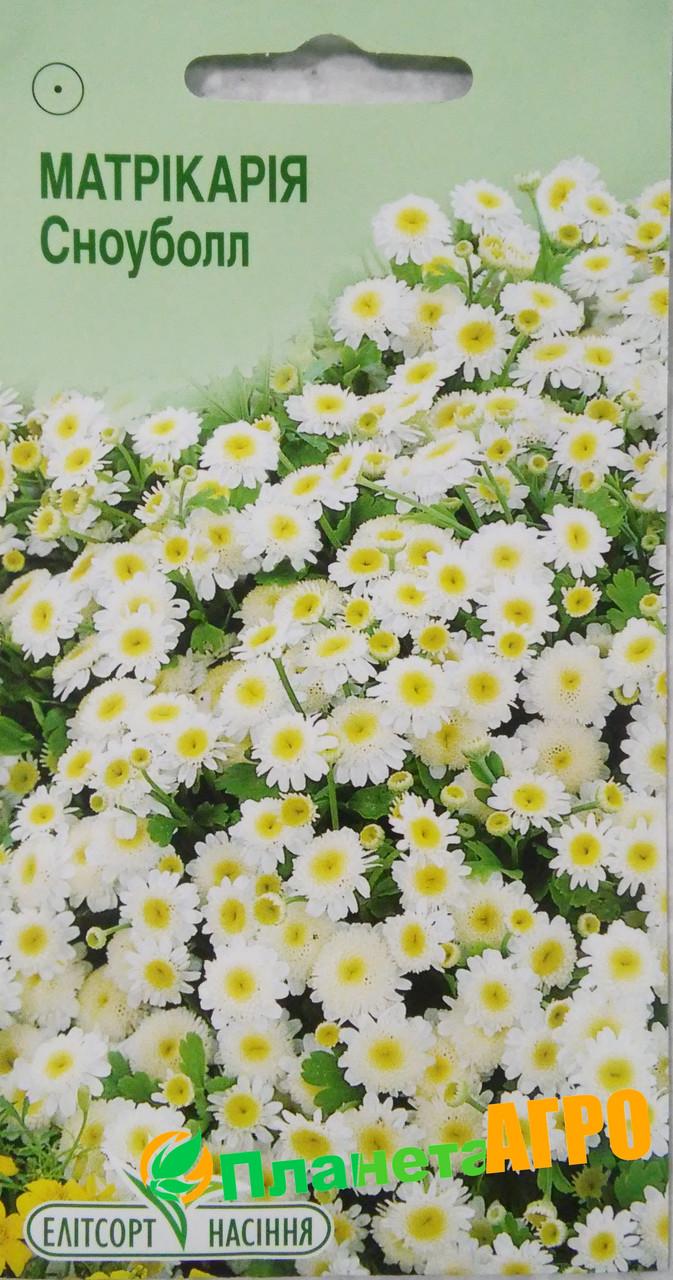 матрикария фото цветов