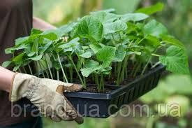 Затверджено Порядок ведення Реєстру сертифікатів на насіння та/або садивний матеріал