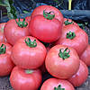 ДИМЕРОЗА F1 - семена томата индетерминантного, 250 семян, Enza Zaden