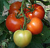 МОНСАН F1 - семена томата полудетерминантного, 500 семян, Enza Zaden