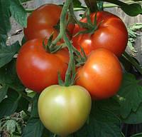 МОНСАН F1 - семена томата полудетерминантного, 500 семян, Enza Zaden, фото 1