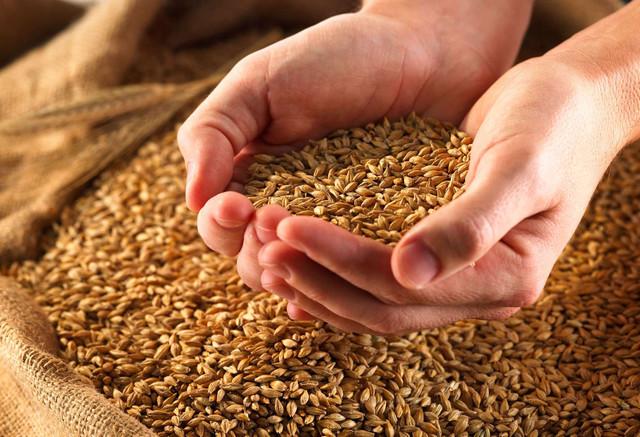 За качеством зерна теперь будет следить Госпродпотребслужба