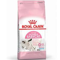 Royal Canin Mother&Babycat/Роял Канин д/кошек в период беременности и кормления/для котят от рождения до 4мес.