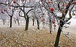 Зима: Правильная подготовка к будущему сезону в январе