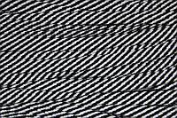 Шнур плоский 15мм (100м) черный+белый , фото 1