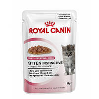 Royal Canin Kitten instinctive in JELLY/Роял Канин влажный корм для котят в желе 85г