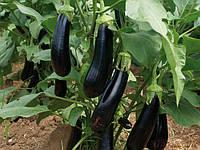 Насіння баклажана МАБЕЛЬ F1 500 насіння, Enza Zaden