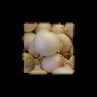 Семена лука Хиело (Hielo). Упаковка 250 000 семян. Производитель Bejo Zaden