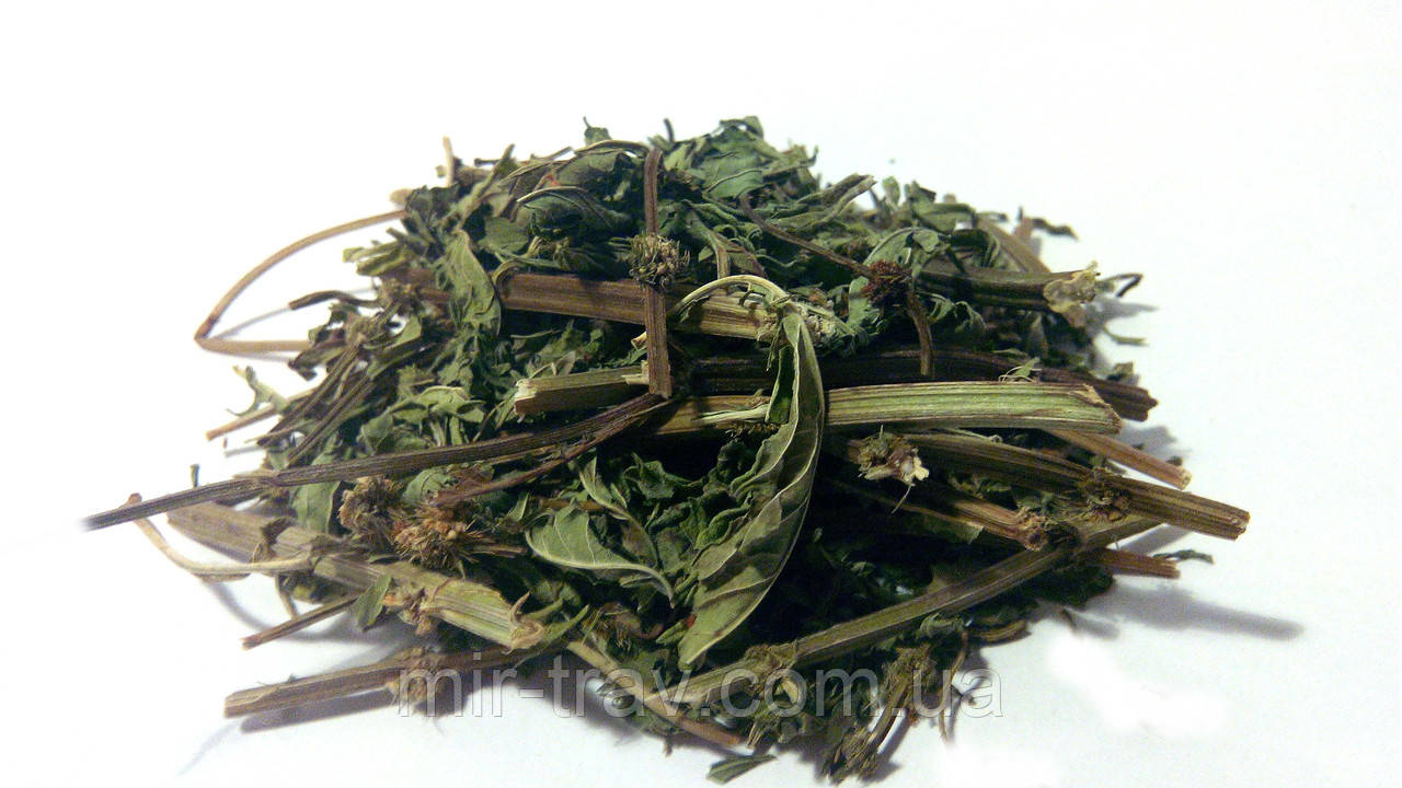 Зюзник европейский трава 100 грамм (крапива болотная)