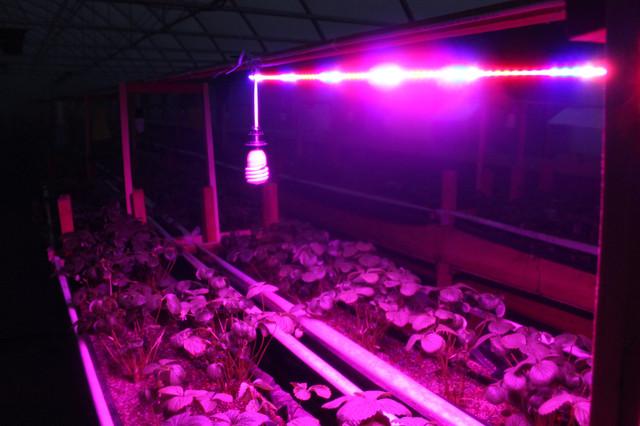 led лампа для растений