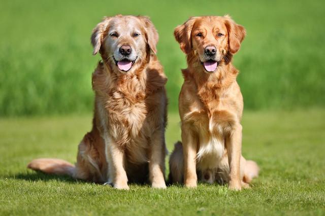 Корм для собак крупных пород с курицей Optimeal Maxi Adult Dog