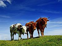 Купить Заменитель Цельного Молока с 20-25 дня, Швейцария