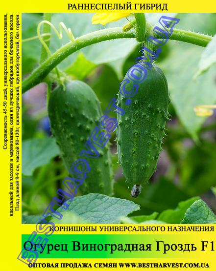 Семена огурца Виноградная Гроздь F1 0,5кг