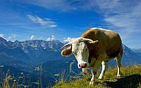 Купить премиксы для дойного стада, Германия