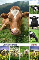 Купить бвмд для дойных коров, Чехия