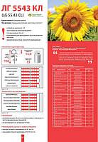 Семена подсолнечника Лимагрейн ЛГ 5543 КЛ (Limagrain LG)