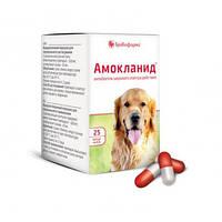 Амокланид капсулы 0,5 г № 25 ветеринарный антибиотик