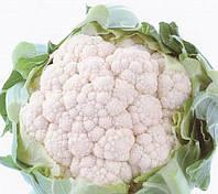 КАШМИР F1 - семена капусты цветной, 1 000 семян, Sakata