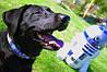 Ошейник для собаки или кота R2-D2