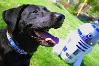 Ошейник для собаки или кота R2-D2, фото 1