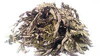 Лапчатка гусиная трава 100 грамм (перстач гусиный, гусиная лапка)