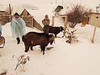 В Украине появится уникальная племенная ферма