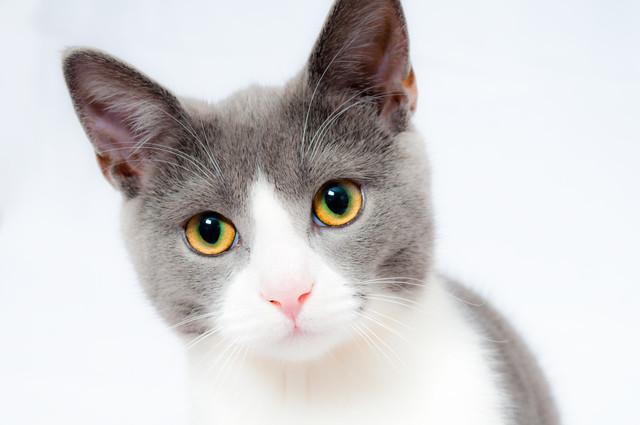 Корм для выведения шерсти у взрослых кошек Trainer Personal Hairball
