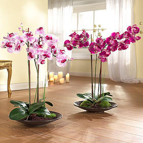 Всё для орхидей