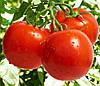 ДЖАМПАКТ F1 - семена томата, Sakata