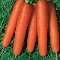 Семена моркови Камаран F1 (Kamaran F1). Упаковка 1 млн. семян (фр. 1,6 - 1,8). Производитель Bejo Zaden