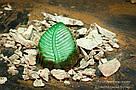 """Шоколадные конфеты ручной работы """"Мятные листочки"""", 1 шт, 20 г., фото 8"""