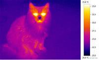 Как выбрать тепловизор? Часть первая