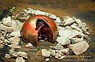 """Шоколадные конфеты ручной работы """"Горячая вишня с перцем"""", 1 шт, 20 г., фото 3"""