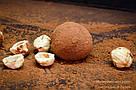 """Шоколадные конфеты ручной работы """"Трюфель с фундуком"""", 1 шт, 15 г., фото 2"""