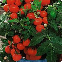 Семена Томат Бонсай (Балконный) 0,1 грамм SeedEra