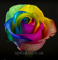 Роза радужная опт Роза радуга Happy Rose Rainbow Rose разноцветная роза