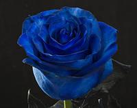 Синие розы оптом и в розницу, blue rose