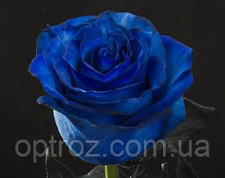 Где купить синие розы оптом плетучие цветы живые