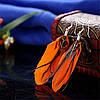 Сережки пір'їнки помаранч