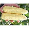 Кукуруза сахарная Уокер F1  25000сем.