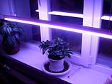 Люминесцентные лампы для растений (фитолампы)