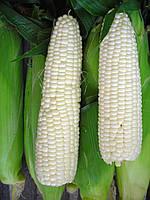 Семена Кукуруза сахарная Белоснежка  20г (пакет-гигант), ТМ Урожай