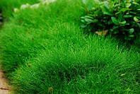 Выбор трав для газона