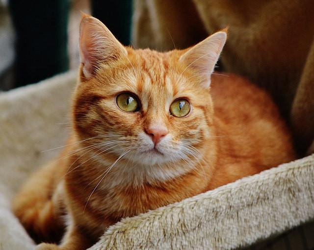 Корм для кошек с тунцом Trainer Natural Adult Tuna