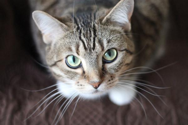 Корм беззерновой для кошек Josera Nature Cat