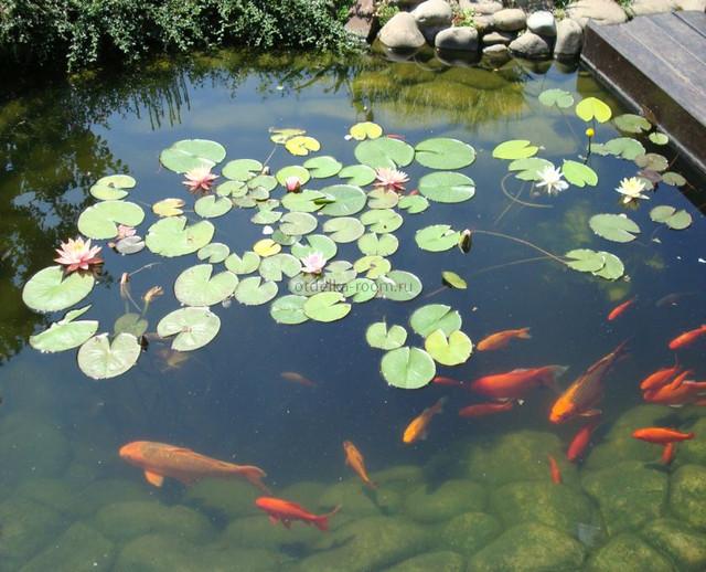 Выбираем рыбу для пруда