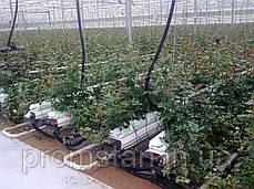 Лоток под розу с высоким бортом, фото 2